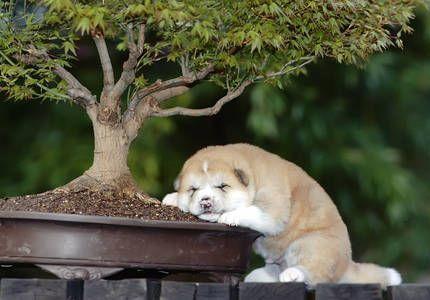 Hund unter'm Bonsai