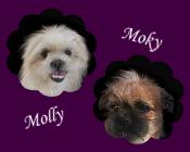 ShihTzu Molly und ihr Baby Moky